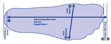 The Length Of The Shoe